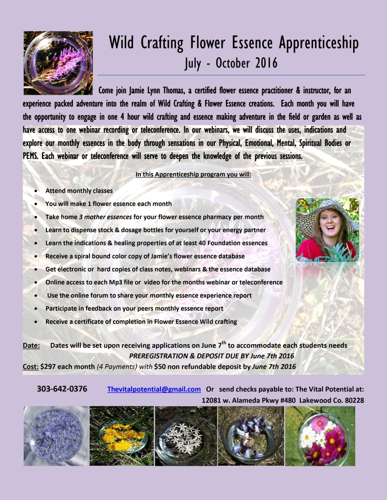 Flower Essences Wildcrafting Apprenticeship July- october 2016 FLYER