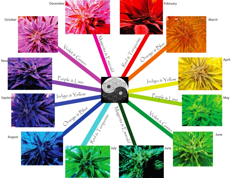 CE COLOR wHEEL Monthly