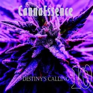 Purple - Destinys Calling- Bleeds